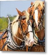 Plow Buddies Metal Print