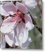 Plum Bloom Metal Print by Rosalie Klidies