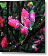 Plum Blossom 1 Metal Print
