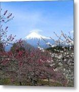 Plum Blossom's At Iwamoto Japan Metal Print