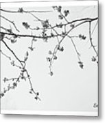Plum Blossoms  Metal Print