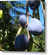 Plum Branch Metal Print