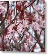 Plum Tree In Bloom Metal Print