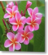 Plumeria After The Rain II Metal Print
