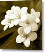 Plumeria - Brown Tones Metal Print
