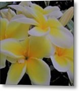 Plumeria In Yellow 4 Metal Print