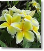 Plumeria In Yellow  5 Metal Print