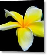 Plumeria In Yellow Metal Print