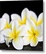 Plumeria Obtusa Singapore White Metal Print