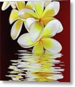 Plumeria Reflections By Kaye Menner Metal Print