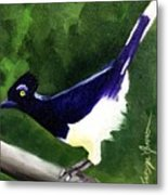 Plush Crested Jay Metal Print