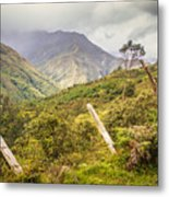 Podocarpus National Park Metal Print