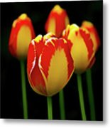 Poetically Tulip Metal Print