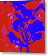 Poinciana Flower 4 Metal Print