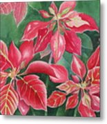 Poinsettia Magic Metal Print
