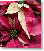 Poinsettias -  Painted And Speckled Metal Print
