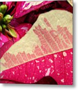 Poinsettias -  Painted And Speckled Up Close Metal Print
