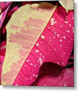 Poinsettias -  Painted And Speckled Up Close Too Metal Print