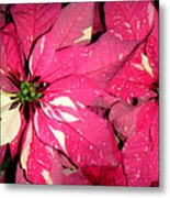 Poinsettias -  Red And White Speckled Metal Print