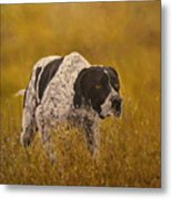 Pointer...to The Point....... Metal Print
