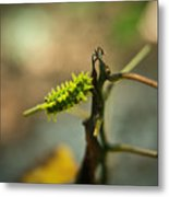 Poisonous Insect Larva Metal Print