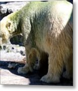 Polar Bear 2 Metal Print