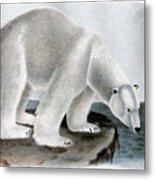 Polar Bear (ursus Maritimus) Metal Print