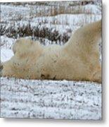 Polar Bear Yoga Metal Print