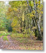 Polish Forest 1 Metal Print