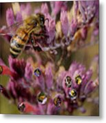 Pollen Bees Metal Print