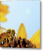 Pollen-coated Honey Bee On A Sunflower Metal Print
