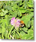 Pollen Collection Metal Print