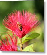 Pollen Collector Metal Print