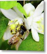 Pollen - Covered - Bee Metal Print