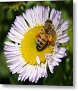 Pollen Harvest Metal Print
