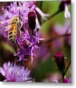 Pollen Powdered Bee Metal Print
