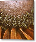 Pollenated Painted Daisy Metal Print