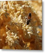 Pollinating Bee Metal Print