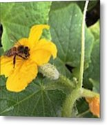 Pollinating Cucumbers 2  Metal Print by Daniele Smith