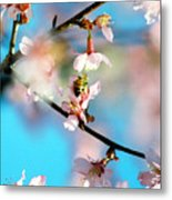 Pollination 1.02 Metal Print