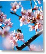 Pollination 1.11 Metal Print
