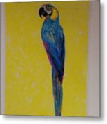 Polly The Parrot Metal Print