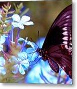 Polydamas Swallowtail Butterfly Metal Print