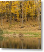 Pond And Woods Autumn 1 Metal Print