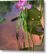 Pond Dreams10 Metal Print