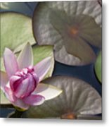 Pond Flower Metal Print
