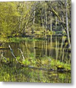 Pond In The Undergrowth. Metal Print