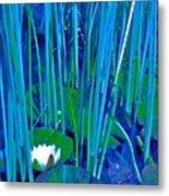Pond Lily 6 Metal Print