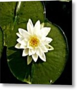 Pond Lily Metal Print