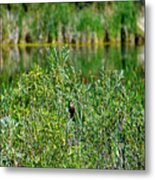 Pond On Cherry Creek Study 2 Metal Print